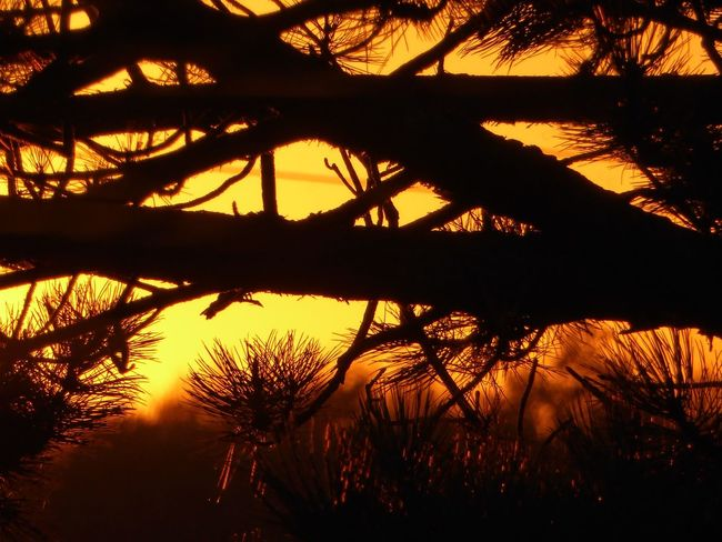 View From My Window Sundown, Nightfall, Close Of Day, Twilight, Dusk, EveningFor My Friends 😍😘🎁 Sunsetlovers Close-up Silhouette Addicted To Sunlight Sundown Through Trees Silhouette Beauty In Nature Tranquility Sunsetlover Sunsetphotographs EyeEm Best Shots - Sunsets + Sunrise