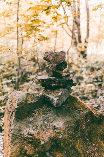 Beauty In Nature Close-up Focus On Foreground Forest Gestapelt Growth Herdecke Herr Der Ringe Keltic Keltisch Nature Neighborhood Map No People Outdoors Stack Stacked Stacked Stones Stapled Stapled Stones Stone Stonehenge Stones The Great Outdoors - 2017 EyeEm Awards The Week On EyeEem Tree