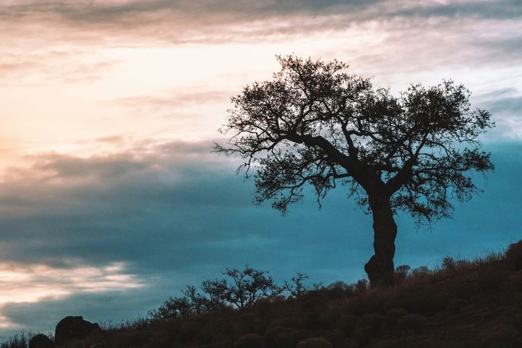 Tree Nature Sky Sunset Beauty In Nature Silhouette Outdoors No People Cloud - Sky Forest Scenics Tranquility Landscape Nature Tranquil Scene