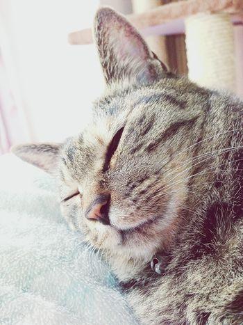 IPhoneography So Hot Cat うちの猫