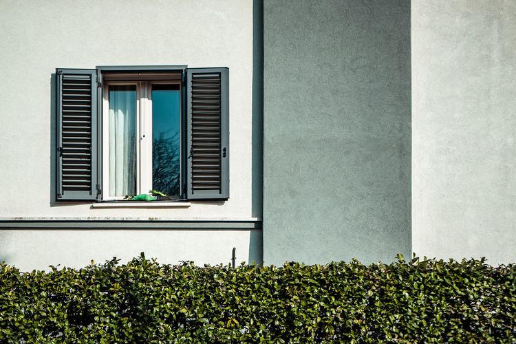 Plants growing by window
