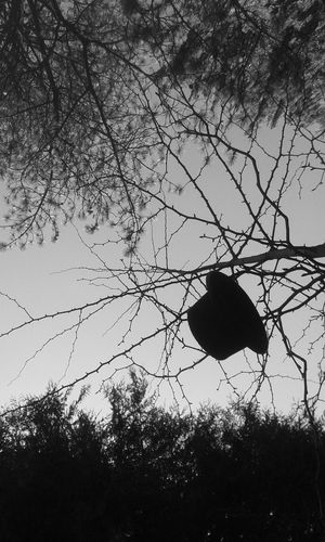 Hat in a Tree (