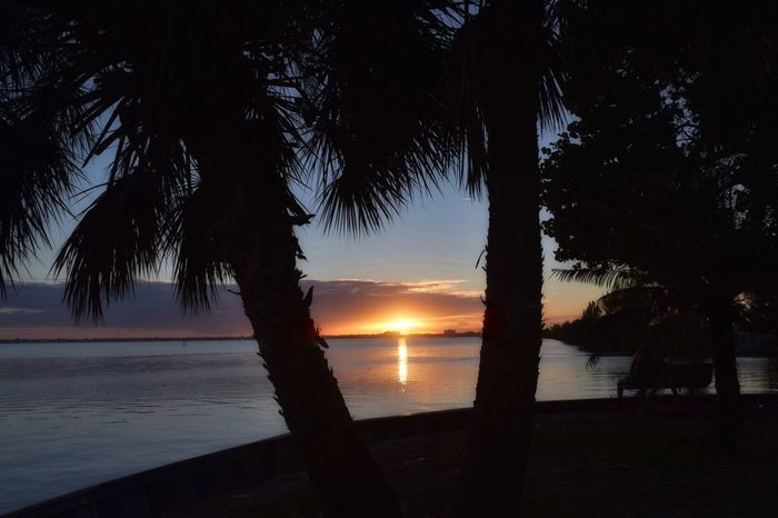 Sunset at the river! Always beautiful! Sea Sunset Nature Beach Water Taking Photos Taking Pictures Sunset_collection Sunset Silhouettes Hello World Sky Tranquility Horizon Over Water Scenics Tree Tranquil Scene Idyllic No People Outdoors Vacations Palm Tree Day