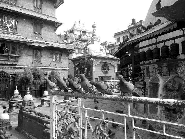 Pigeons Kathmandu Valley Nepal #travel Kathmandu, Nepal Kathmandu Nepali Way Buddha Temple Buddhist Temple Nepal Travel Hinduism Hindu Temple Hindu Gods Buddhism Place Of Worship