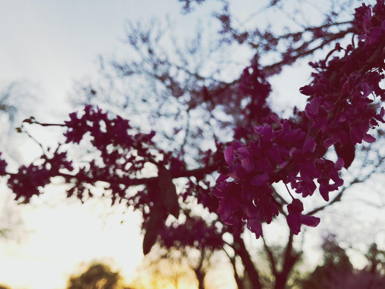 flower, nature, beauty in nature, growth, tree, fragility, blossom, freshness, branch, no people, springtime, outdoors, selective focus, tranquility, day, low angle view, petal, close-up, scenics, sky, blooming, flower head
