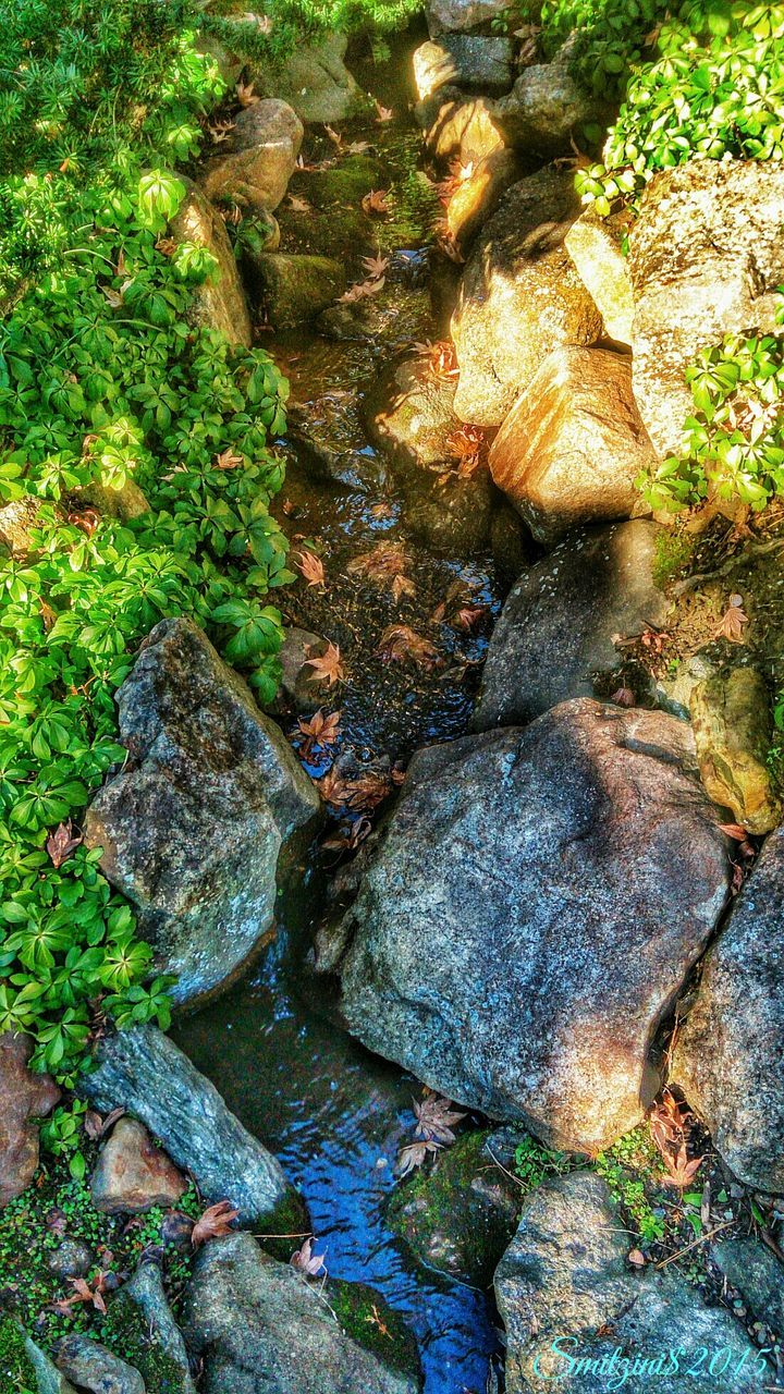 rock - object, nature, water, high angle view, moss, no people, day, beauty in nature, plant, lichen, growth, outdoors, tree, close-up