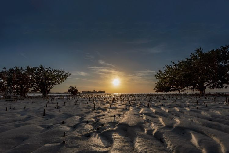 Mangroves sunset Tree Sky Land Beach Plant Sand Scenics - Nature Tranquil Scene Beauty In Nature Tranquility Nature Sunset Sunlight No People Non-urban Scene Idyllic Outdoors Water Cloud - Sky Sun