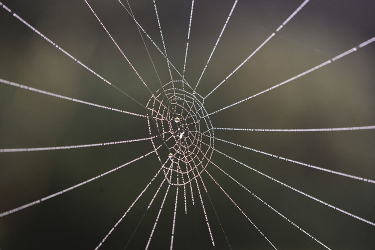 Tau im Spinnennetz. Animal Themes Beauty In Nature Close-up Day Focus On Foreground Fragility Full Frame Nature No People Outdoors Pattern Spider Spider Web Spinne Spinnennetz Water Web