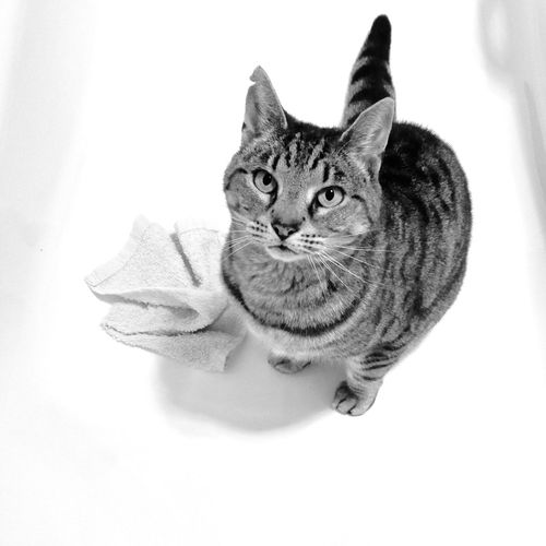 Molly the explorer cat! Adopted from the SPCA she has given us much joy. IPhoneography Bath Blackandwhite Cat White Light And Shadow Shadow Minimalism Animals IPS2016Composition