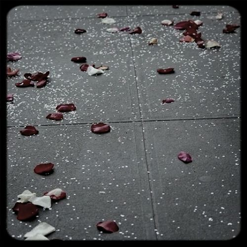 Rose petals on the concrete jungle First Eyeem Photo