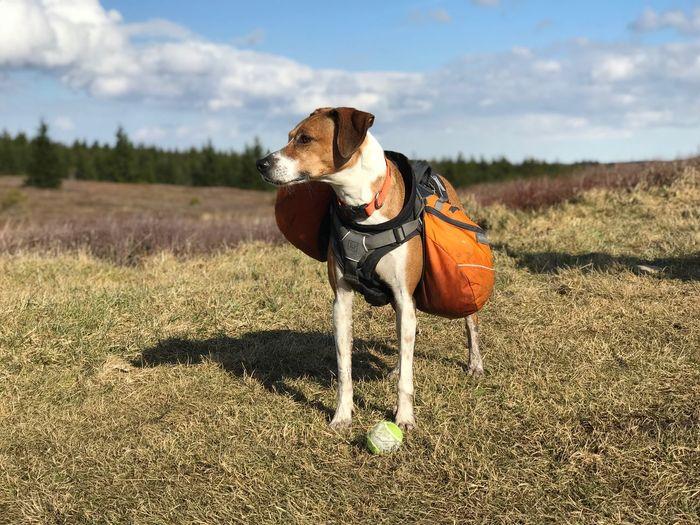 Hiking Wilderness Area Dog EyeEm Selects Animal Themes Animal One Animal Mammal Domestic Animals Sky Environment