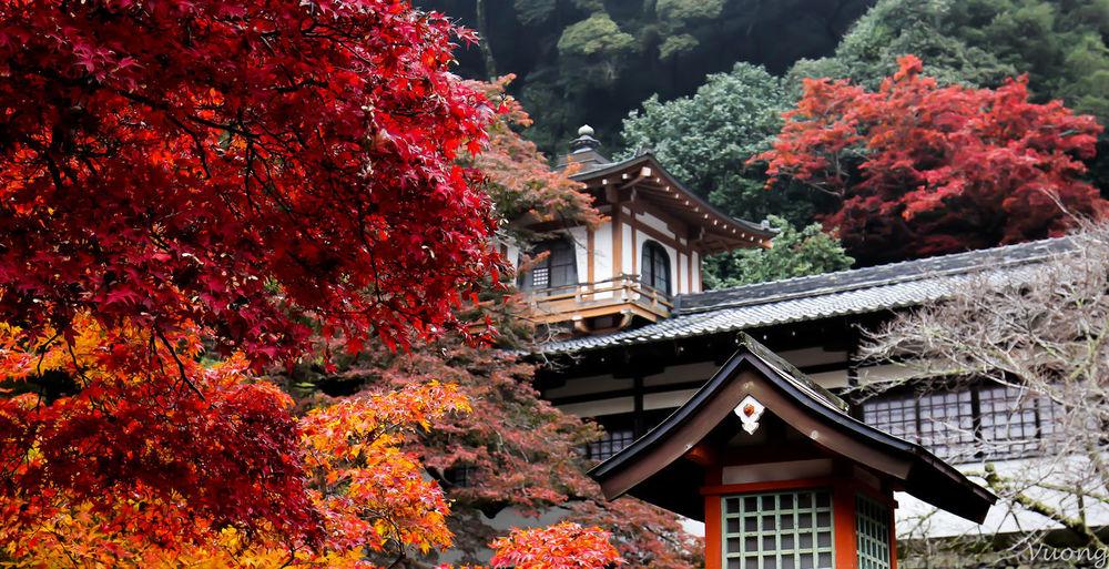 Autumn Autumn Collection Autumn colors Autumn Leaves Japan Autumn Autumn Beauty Beauty In Nature Nature First Eyeem Photo