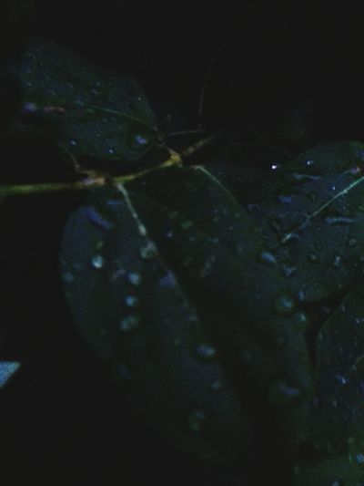 Nature Leaf Landscape Green Color Outdoors Tranquility Growth Fragility Freshness Beauty In Nature Night Rain Raindrops Darkness