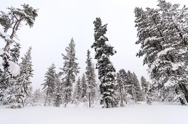 Snow tundra
