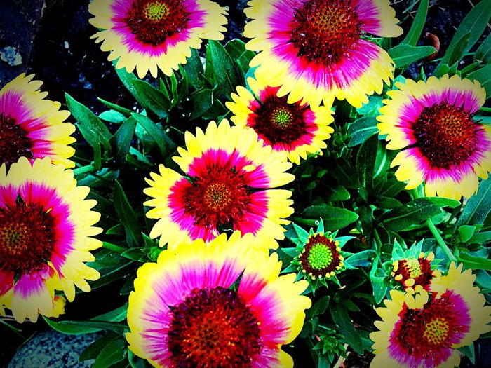 Flower Fragility Freshness Growth Petal Beauty In Nature Nature Flower Head Purple Multi Colored High Angle View No People Day Outdoors Plant Blooming Full Frame Close-up