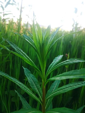 Simple Photography Plant Plants Xperiaphotography XperiaZ3 XPERIA Green