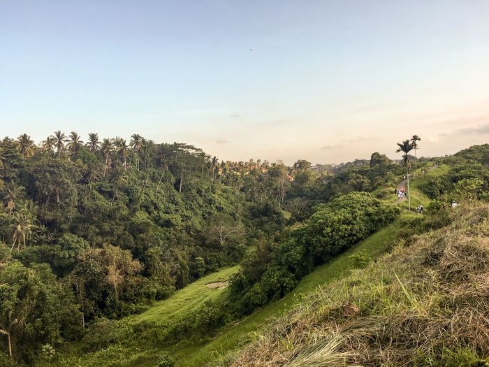 Campuan Ridge Baliphotography Bali, Indonesia Bali Plant Sky Growth Tree Nature Beauty In Nature EyeEmNewHere Field Outdoors Agriculture Landscape