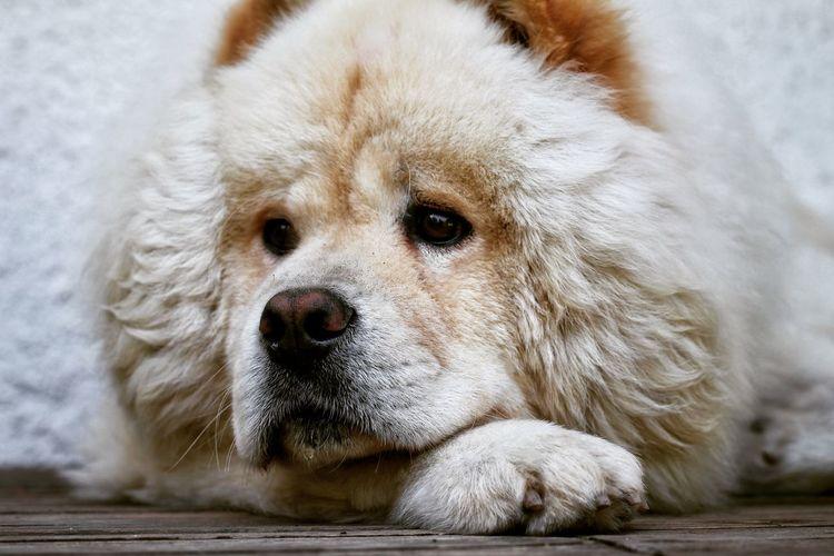EyeEm Selects Pets Portrait Dog Looking At Camera Animal Hair Close-up