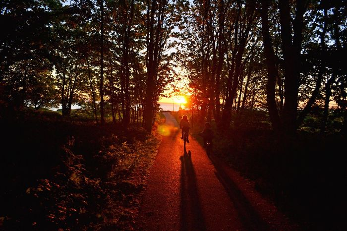 The Week On EyeEm Tree Sun Sunset The Way Forward Beauty In Nature Silhouette Road Sunlight Transportation Scenics Outdoors People Bicycle Bicycling Trip Freedom Lifestyle Summer Shadow Shadow And Light