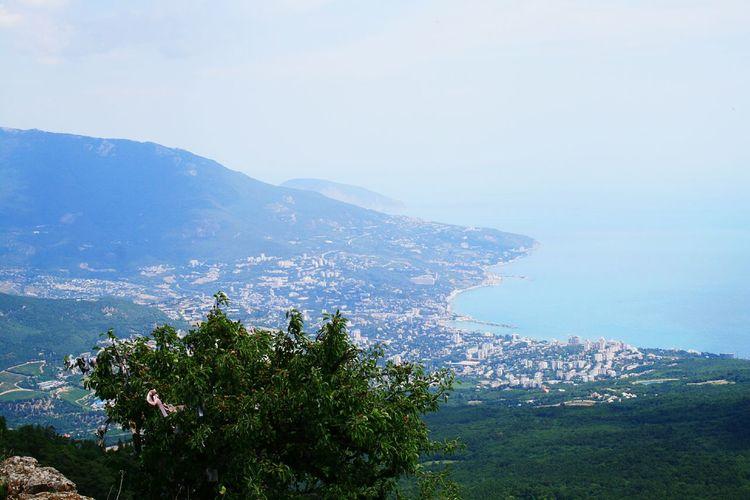 big Yalta Crimea Yalta Sea Seascape Sea And Sky Sea Life Seaside Water Sea Mountain Tree Flower Beach Sky Blooming Plant Life