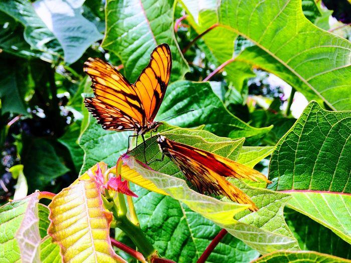EyeEmNewHere Nature Butterfly Butterflies First Eyeem Photo
