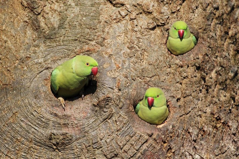 Low angle view of parrots on tree