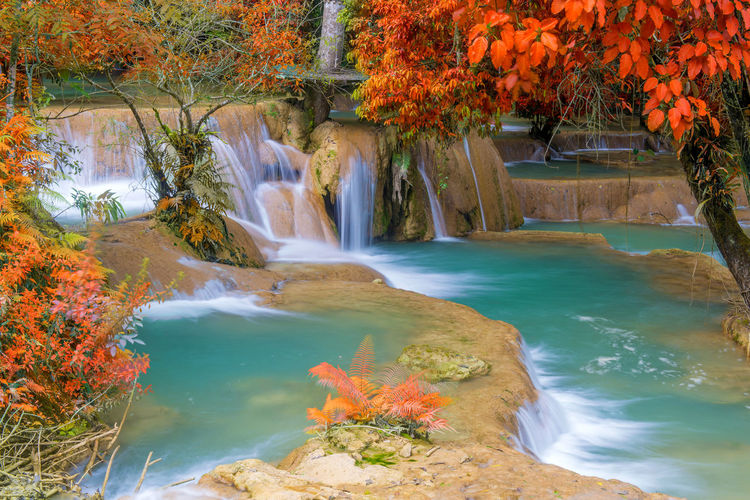 Water Beauty In Nature Plant Nature Tree Scenics - Nature Motion No People Autumn Day Flowing Water Waterfall Outdoors Change Tranquility Forest Growth Land Orange Color Flowing Power In Nature