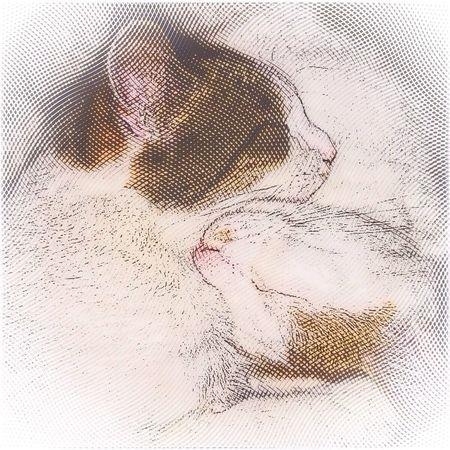 Snuggles Cats Cute Cats Cuteness Overload