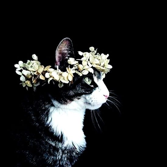 Cats 🐱 Cat Lovers 😙❤ Hello Beautiful