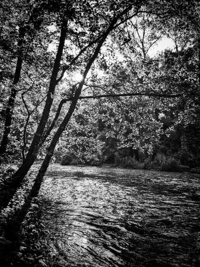 The Great Outdoors - 2016 EyeEm Awards Landscapes With WhiteWall Black And White Black & White Riverside Nature Walking Relaxing Enjoying The Sights Contre-jour Wood Landscape No People Italy Tree Sunset