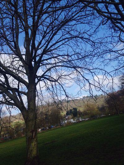 Tree Lonely