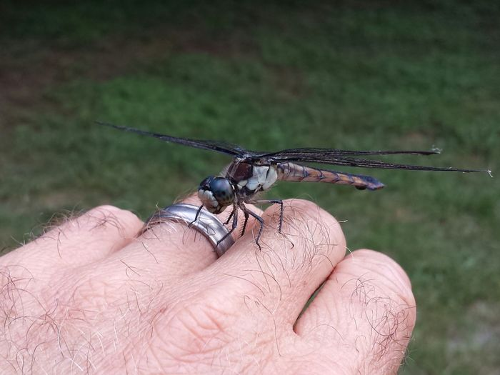 Cropped hand of man with dragonfly