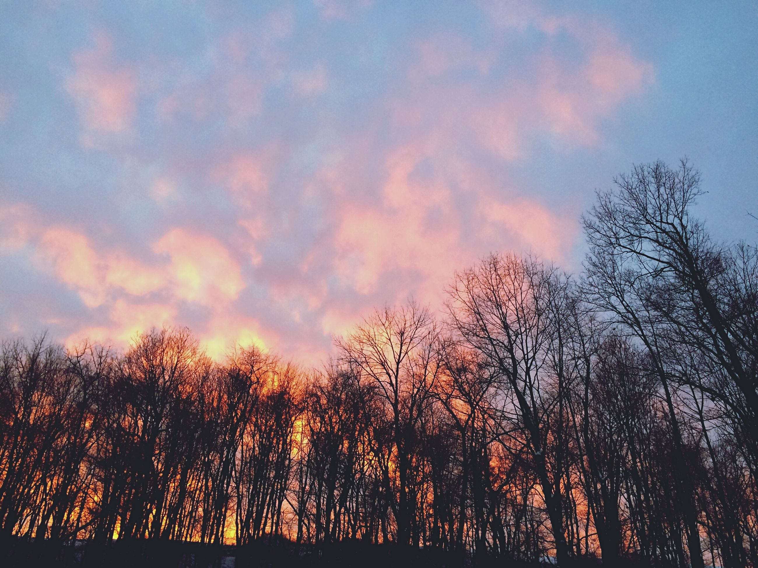 tree, sky, sunset, silhouette, tranquility, beauty in nature, low angle view, scenics, tranquil scene, cloud - sky, nature, bare tree, branch, growth, idyllic, orange color, cloud, outdoors, cloudy, no people