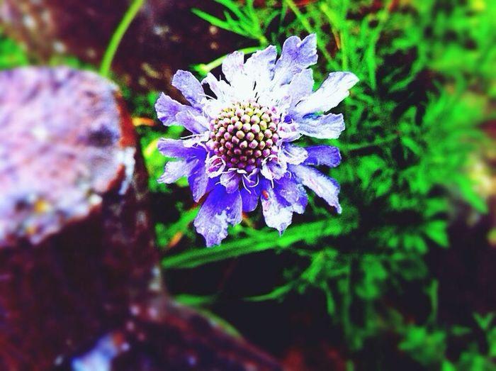 Flower Beautiful Popular