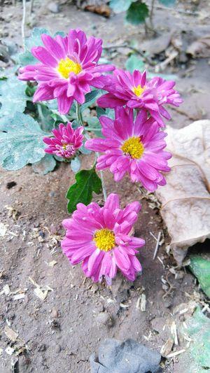Flowers always simles at us:) First Eyeem Photo