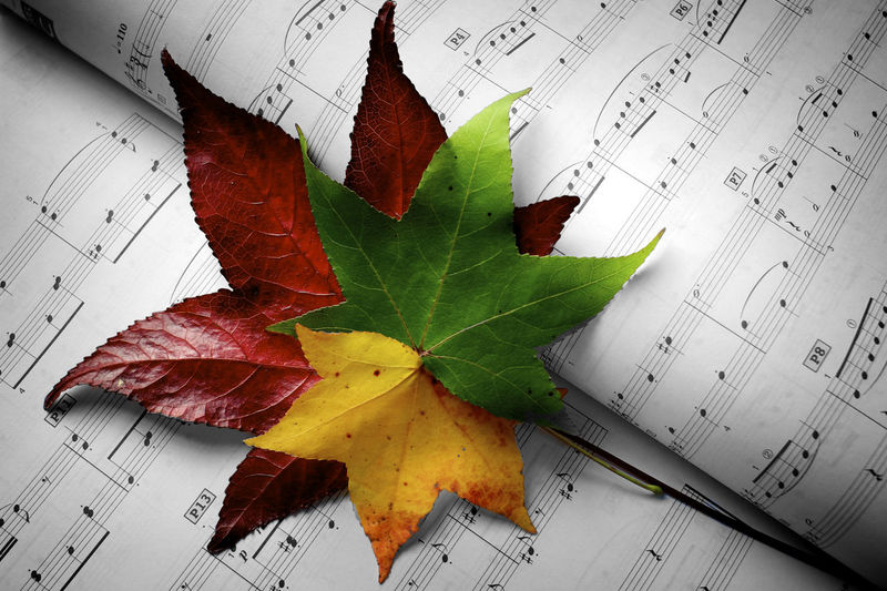 Music Abstract Close-up Colors Conceptual Conceptual Photography  Leaf Leaf 🍂 Music