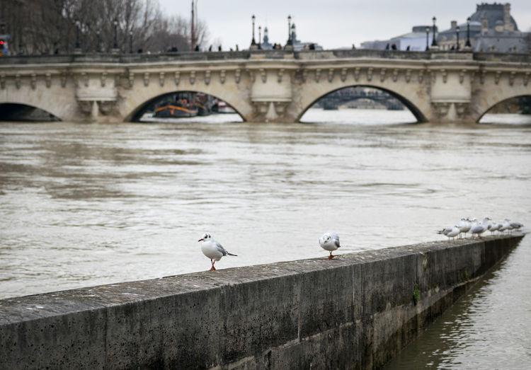 Birds perching on footbridge over river against sky