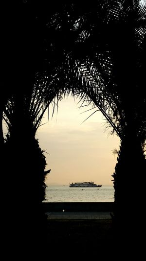 Silhouette Water Sea Sunset Travel Destinations Tree No People Sky Outdoors Nature Scenics Cityscape City Beauty In Nature Transportation Ships Palm Tree Ship Trees horizon over water Day Frame It! Framed Framed By Nature Framed By Trees