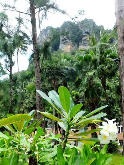 Krabi Thailand Nature Photography Green Color Naturaleza Paisaje Beauty In Nature Travel Destinations Wedding Travel
