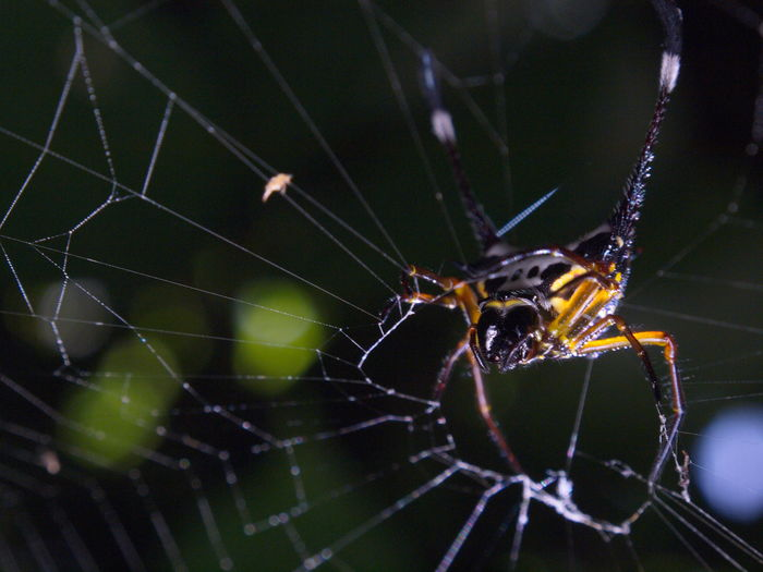 Spider Web Spider One Animal Insect Animal Themes Web Animals In The Wild Animal Wildlife Close-up Animal Leg Fragility No People Focus On Foreground Nature Outdoors Trapped Day Arachnid Macro Insect Photography Nature