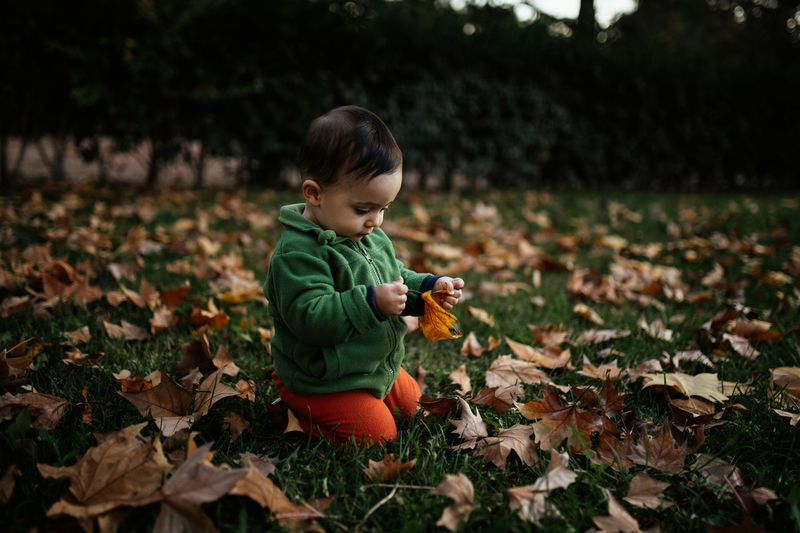 Toddler playing with autumn leaves