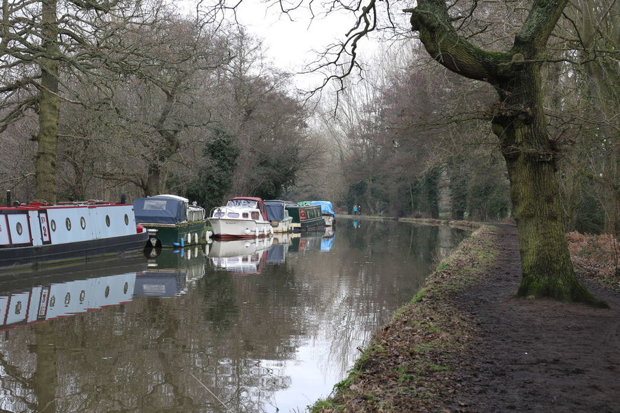 Barges Beauty In Nature Branch Canal Cold Temperature Day Growth House Boats Moored Boats Nature Navigation No People Outdoors River River Wey Scenics Sky Surrey Countryside Towpath Tranquility Tree Tree Trunk Walking Water Winter