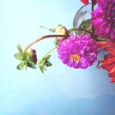 Floral composition on the blue table Flower Stillife Still Life Slow Life