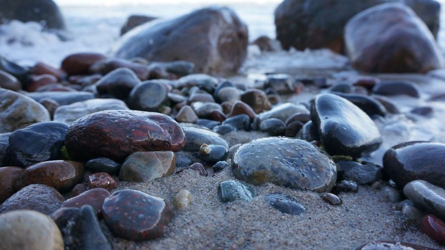 Beach Pebble Solid Land Rock No People Close-up Large Group Of Objects Outdoors Tranquility Stone - Object Abundance Sea Rock - Object Animal Wildlife Stone Nature Focus On Foreground Selective Focus Day