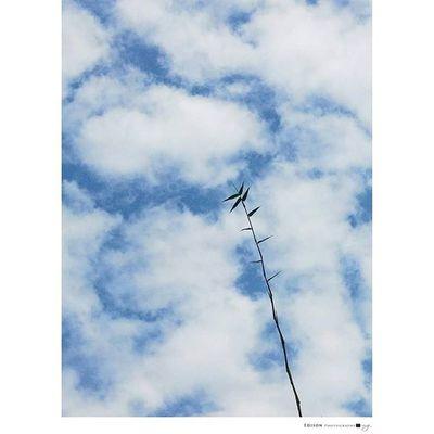 【 空 】 儘管下些雨 依舊藍天白雲 簡約也是一種美。 G4 手機攝影 365Snap Sky