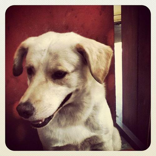 Amo fotografiar a los perritos callejeros Mascotasperu Doglover Igersperu Lunahuana semanasantaperu instadog