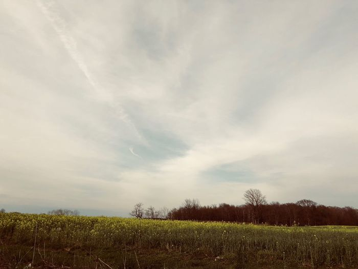 White sky's Cloud - Sky Sky Plant Tranquility Tranquil Scene Beauty In Nature Field Landscape Land Environment Scenics - Nature No People Nature Growth Tree Day Idyllic Outdoors Non-urban Scene