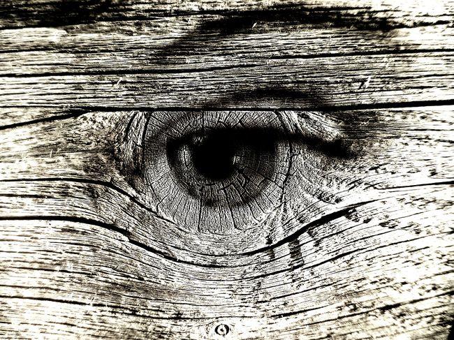 EyeEm Best Shots Eyes Auge Blick Elfe Woods Tree Watch Watching You