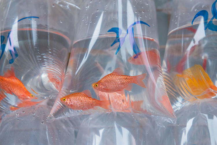 Fish In Plastic Full Of Water