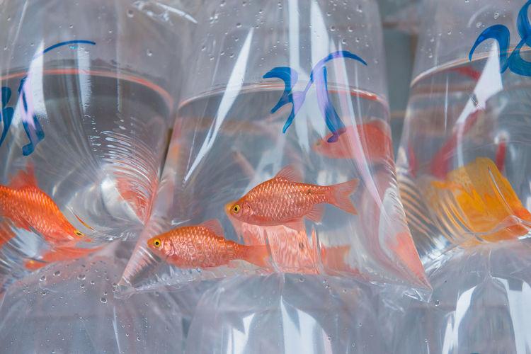 HongKong Market Sale Animal Animal Themes Animal Wildlife Close-up Fish Fish Market Group Of Animals No People Orange Color Plastic Bag Price Swimming